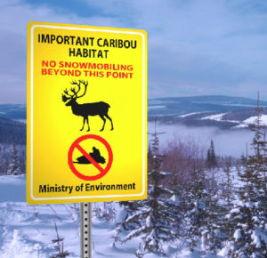 caribou closures